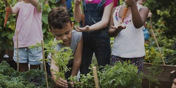 Ekologiczna uprawa roślin >>